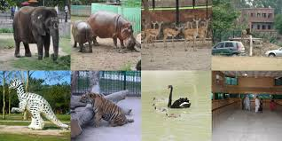 Govt Punjab Wildlife, Forest,