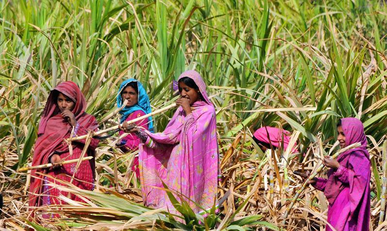 Pakistani Village Girls Picture